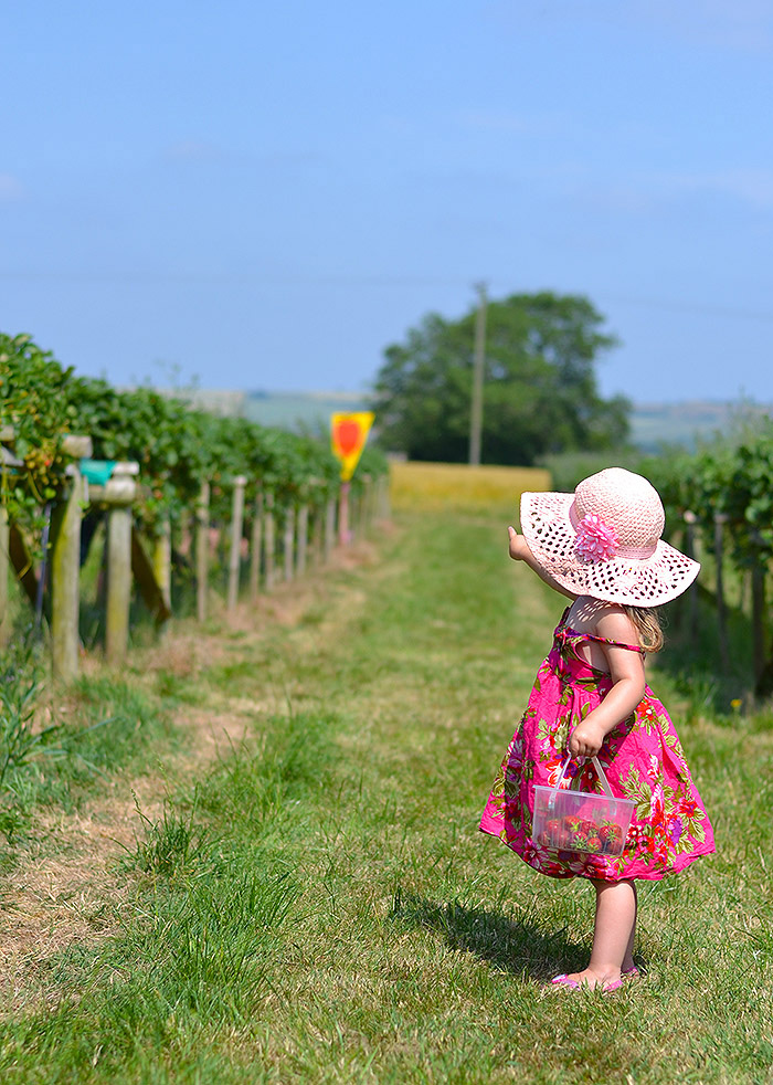 strawberry picking somerset