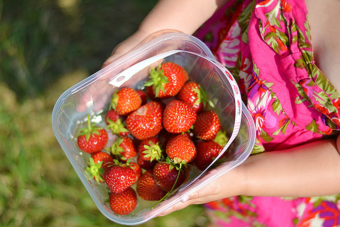 strawberry-picking-strawberries