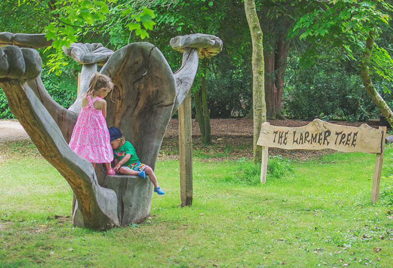 kids-climbing-the-larmer-tree